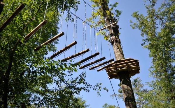 Tree Experience Rescaldina