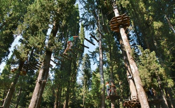 Tree Experience Vincigliata